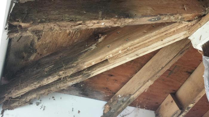 rotted rafters